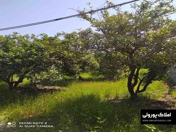 قیمت زمین مزگاه نوشهر