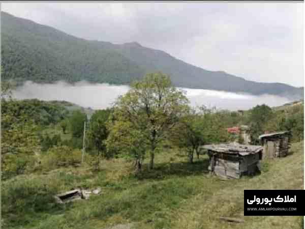 قیمت زمین طویر مرزن آباد